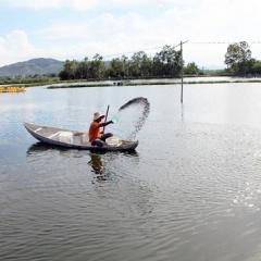 Tin vắn ngành thủy sản đáng chú ý trong tuần 28 năm 2018