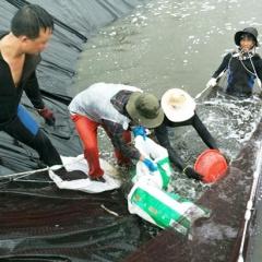 """Hà Tĩnh: Chủ đầm khẩn trương thu hoạch tôm """"chạy"""" bão"""