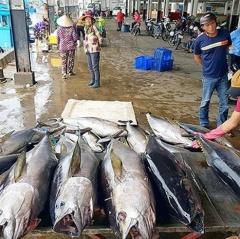 EC ra điều kiện rút thẻ vàng cho thủy sản Việt Nam