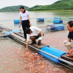Bán khách sạn tiền tỷ, gom tiền về quê nuôi cá lồng bè