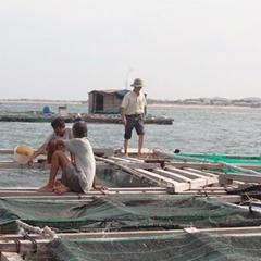 Vĩnh Tân khuyến cáo không nên thả nuôi cá ở thời điểm này