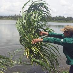 Bỏ ra 200 triệu đồng thuê hồ để nuôi cá theo cách tự nhiên