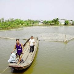 Để nghề nuôi cá tra hiệu quả