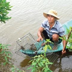 Nhân rộng mô hình nuôi cua bán thâm canh hai giai đoạn
