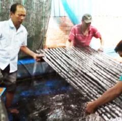 Tận dụng chuồng heo cũ nuôi lươn không bùn lời cả chục triệu/lứa