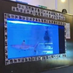 Nhà hàng Malaysia nuôi cá mập gây phẫn nộ