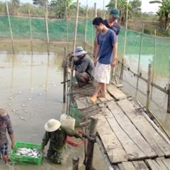 Nuôi thủy sản chất lượng cao ở Tánh Linh