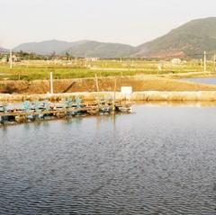Nông dân nuôi tôm Hà Tĩnh lỗ nặng do giá rớt thê thảm