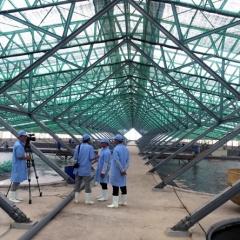 Khu nuôi tôm công nghệ cao ở Phù Mỹ Bình Định