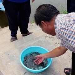 """Xây dựng An Giang thành """"vựa giống"""" cá tra vùng ĐBSCL"""