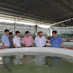 Ninh Thuận: Triển khai giám sát an toàn dịch bệnh tại cơ sở sản xuất giống