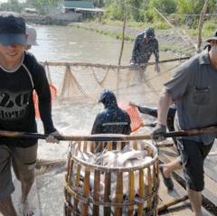 Cơ hội đẩy mạnh xuất khẩu cá tra sang Trung Quốc