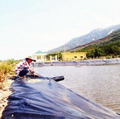 Đáp ứng điều kiện khi thuê đất tại vùng sản xuất tôm giống Ninh Vân