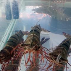 Đề xuất 5 đối tượng thủy sản nuôi chủ lực của Việt Nam