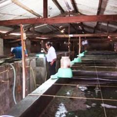 Khánh Hòa: Quy hoạch trại sản xuất thủy sản tập trung