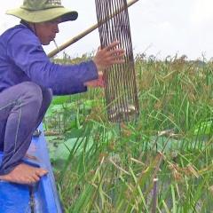 Mùa bắt cá rô đồng bằng xà di