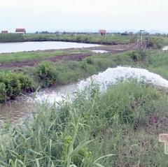 Nga Sơn khôi phục diện tích nuôi tôm sau mưa bão
