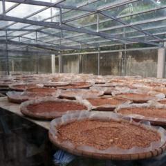 Mắm tôm chà thơm đượm nắng ở Gò Công