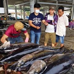 Cùng có lợi với chuỗi liên kết khai thác, chế biến, tiêu thụ cá ngừ