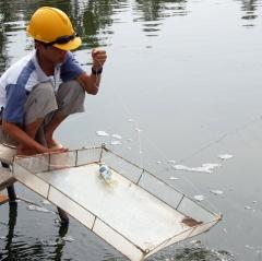 Quảng Bình: Dịch bệnh làm thiệt hại 13,2 triệu con tôm giống thả nuôi