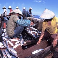Dự luật mới của Indonesia nhắm vào các chủ tàu cá bất hợp pháp