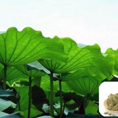Bột lá sen - Thảo dược mới trong nuôi trồng thủy sản