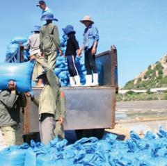 Phát triển nghề muối ở Ninh Hải