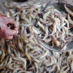 Ấn Độ: Nguồn cung tôm nguyên liệu thiếu hụt từ tháng 9