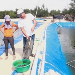 Quảng Bình: Hiệu quả mô hình cá chạch bùn trên ao lót bạt