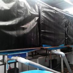 TPHCM: Ứng dụng công nghệ tuần hoàn trong nuôi cá chình bông