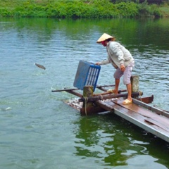 Bà Rịa - Vũng Tàu: Phát huy tiềm năng thủy sản