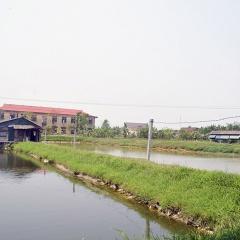 Người nuôi cá Quảng Trị khó khăn vì dịch bệnh rớt giá