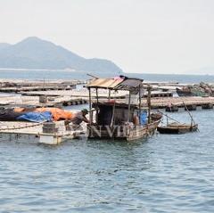 Nuôi ngao đảo Vĩnh Thực: Hoang mang chờ quy hoạch