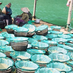 Quản lý, khai thác bãi triều Quảng Ninh: Còn nhiều bất cập