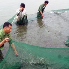 Tập trung vào mũi nhọn nuôi trồng thủy sản ở Hải Hà