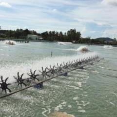 Nghệ An: Hiệu quả của mô hình nuôi tôm theo công nghệ Semi Biofloc