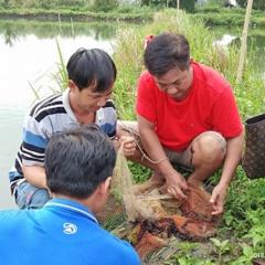 Đồng Nai: Bỏ cá nuôi tôm càng xanh, lời gấp 3 - 4 lần