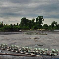 Hà Tĩnh: Bỏ không hàng trăm ao tôm vì giá thấp