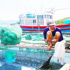 Cam Ranh: Cá tôm chết rải rác do ô nhiễm môi trường