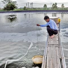 Quảng Ninh: Dịch bệnh trên tôm nuôi vẫn chưa được khống chế triệt để