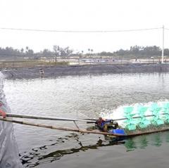 Quảng Nam: Hỗ trợ người dân nuôi tôm theo hướng VietGAP