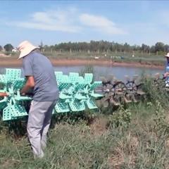 Nhiều diện tích nuôi tôm ở Võ Ninh bị bỏ hoang
