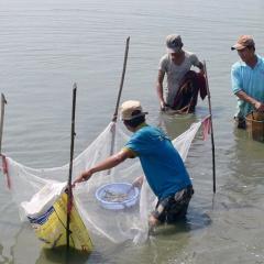 Quảng Nam: Người nuôi tôm cần đề phòng khi nắng nóng xen kẽ mưa rào