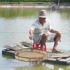 Long An: Nông dân cần chủ động phong trị bệnh cho tôm