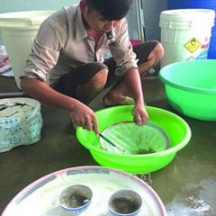 Ngọc Hiển: Chủ động phòng chống dịch bệnh trên tôm