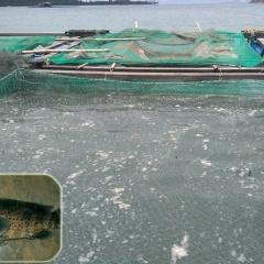 Khánh Hòa: Khuyến cáo về công tác phòng bệnh động vật thủy sản