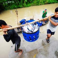 WTO thành lập ban hội thẩm về tranh chấp cá tra Việt Nam-Hoa Kỳ