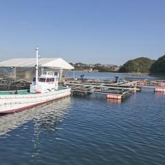 Nhật Bản: Dùng trí tuệ nhân tạo trong nuôi trồng thuỷ sản