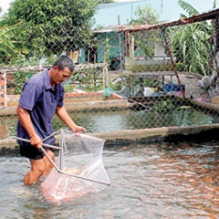 Cần Thơ: Ứng dụng công nghệ mới vào sản xuất giống thủy sản
