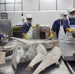 Xuất khẩu cá ngừ phục hồi tốt